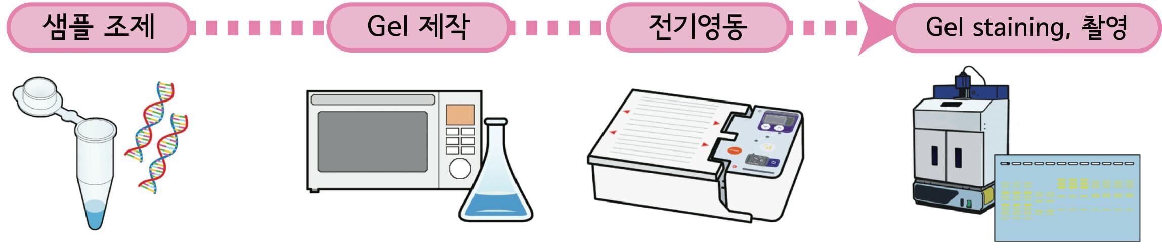 Experimental flow of agarose gel electrophoresis