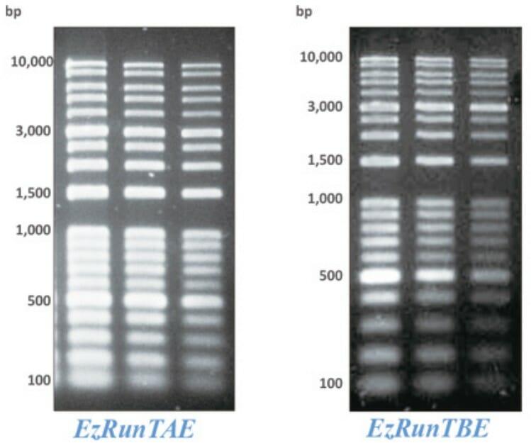Comparison of agarose gel electrophoresis running buffer