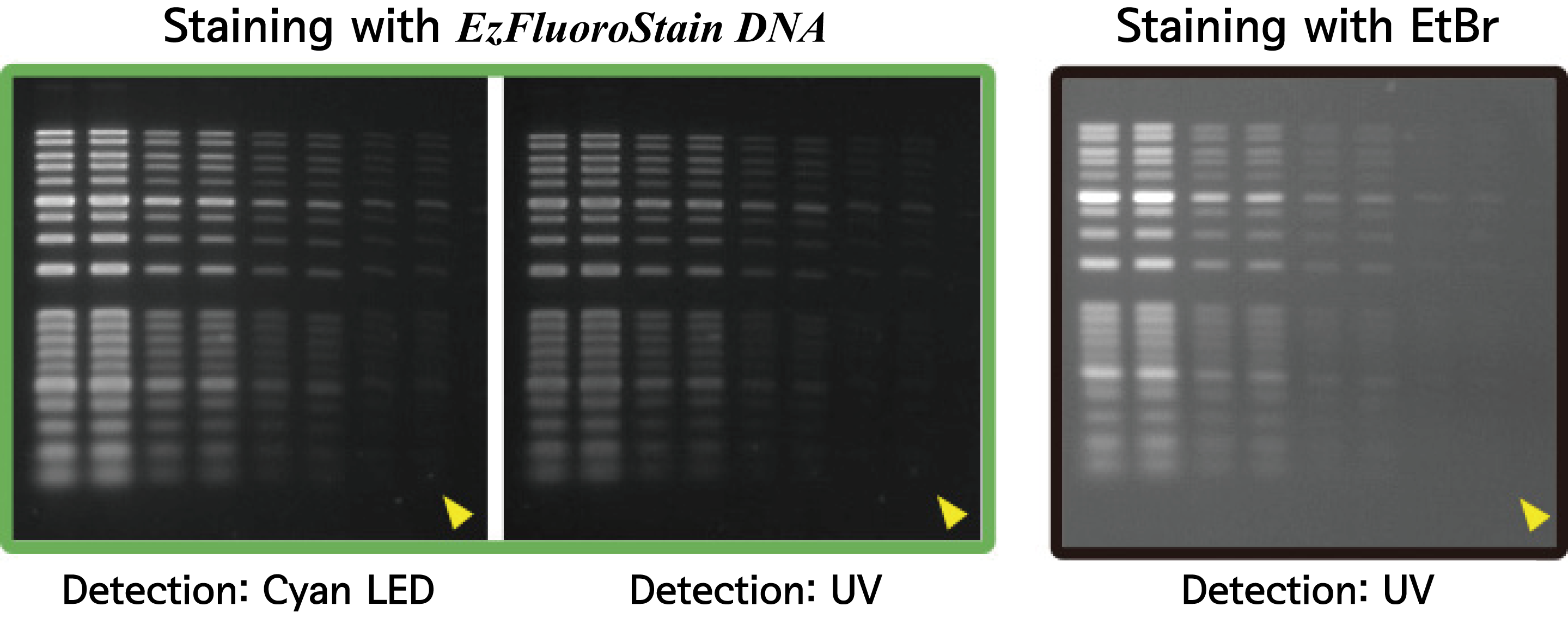 comparison of staining on agarose gel electrophoresis