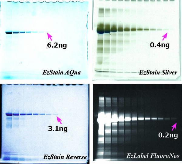 staining method comparison