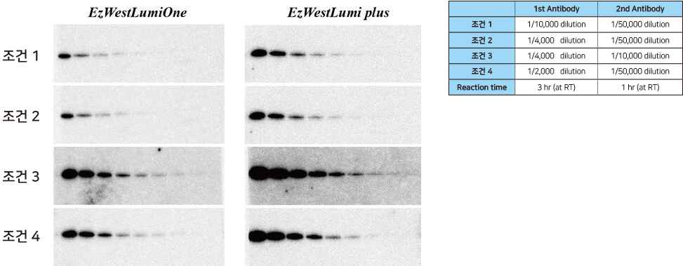 Differences in sensitivity according to the dilution factor of antibodies