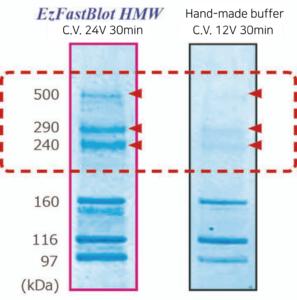 EzFastBlot HMW data