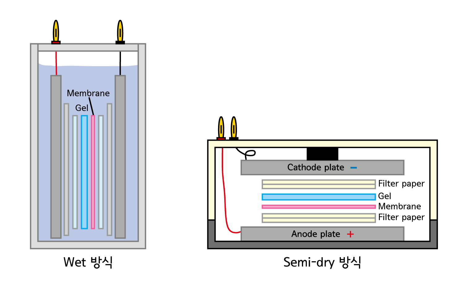comparison of wet transfer and semi-dry transfer